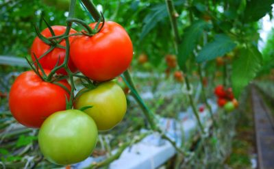 Top Reasons to Include More Tomatoes in Your Diet