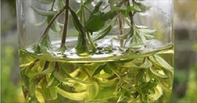 The Oil That Kills Up To 98% Of Cancer Cells In Just 72 Hours