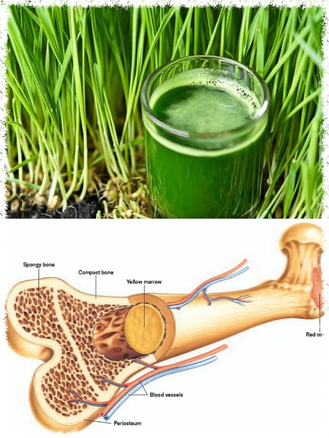 The Foods For Healthy Bone Marrow